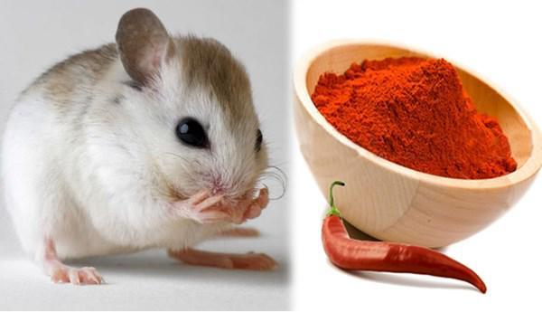 mẹo vặt đuổi chuột