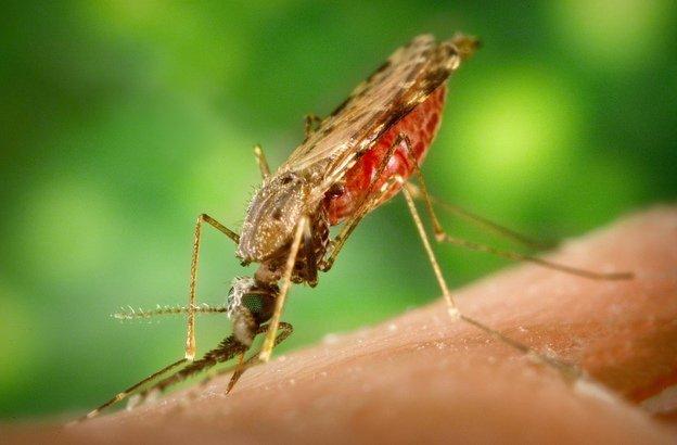 Tác nhân gây bệnh sốt rét và cách phòng ngừa